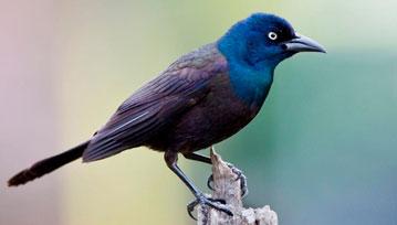 Frases motivacionales: Las gracias de un pájaro